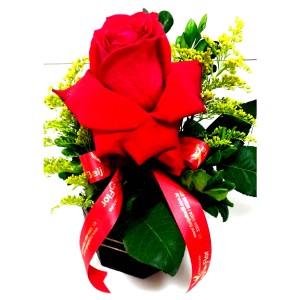 Solitaire uma rosas importada